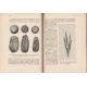 A kenyér és táplálékot szolgáltató növényeink története