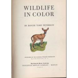 Wildlife in color