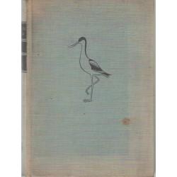 Madarak (Aves)